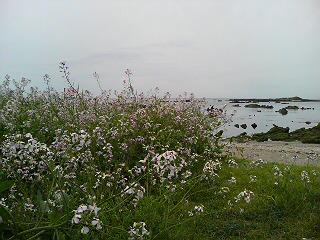 20080417100657.jpg